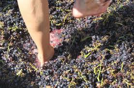 orange county grape stomp