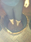 OC wine grape stomping